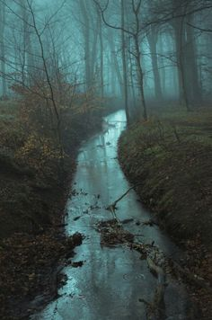 Foggy Forest and Stream Landscape Photography, Nature Photography, Travel Photography, Photography Classes, Beautiful World, Beautiful Places, Ombres Portées, Arte Hip Hop, All Nature