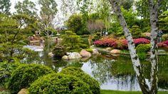 Spice Up Your Backyard With These Helpful Tips! Green Garden, Shade Garden, Garden Trees, Garden Bridge, Garden Pond, Organic Gardening, Gardening Tips, Pallet Patio, Small Space Gardening