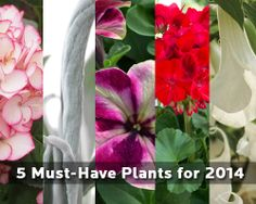 5 Must-Have HGTV HOME Plants for 2014