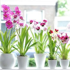 How to potted orchids displayed in a dough bowl typical domestic babe pinterest dough - How to care for potted orchids ...