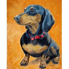Dachshund Dog Art Sitting on Orange Dog Art 8x10 by DottieDracos, $12.00