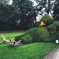 Eine besondere Hecke aus dem Jardin des Plantes in Paris erfreut...