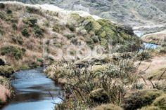 New Zealand Landscape with Tussock and Harakeke royalty-free stock photo