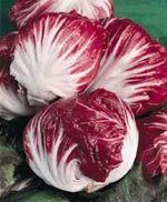 Rosensallat/rosésallat. Asteraceae.