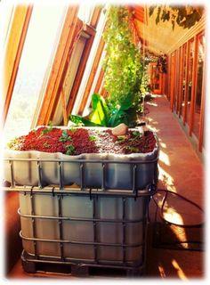 Earthship installs first Aquaponics system @ HQ - Earthship Biotecture | Aquaponics World View | Scoop.it