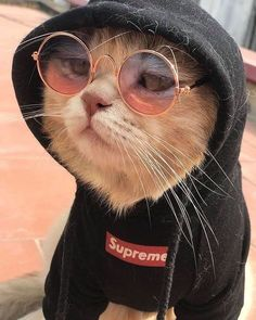 Dj wali babu mera gana to chala do😉 - Outfits Für Teenager - Gatos Cute Cats And Kittens, Baby Cats, Cool Cats, Kittens Cutest, Cute Funny Animals, Cute Baby Animals, Cute Dogs, Funny Cats, Animals Dog