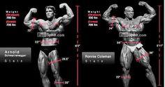 Bodybuilding Schedules: Ronnie coleman vs Arnold schwarzenegger measurements