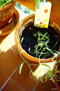 Tütchen 2 Summ, Summ Ob das noch Blümchen werden? Lifestyle Blog, Plants, Flowers, Plant, Planets