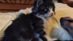 Adorable Abandoned Kitten Finally Reunites With His Brother from Another Mother! (VIDEO) #cats #animals #pets