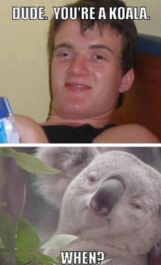 Funny pictures about High man and his koala. Oh, and cool pics about High man and his koala. Also, High man and his koala. Koala Meme, Funny Koala, Funny Animals, Funny Images, Best Funny Pictures, Funny Pics, Ridiculous Pictures, Funny Quotes, 420 Memes