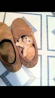Your morning plans could be thwarted by a slipper thief. | 24 Ways Your Day Could Be Ruined By Cuteness