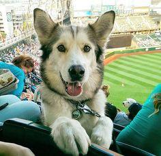 Funny DOG #funny #humor #pics #ifunpic #dogs