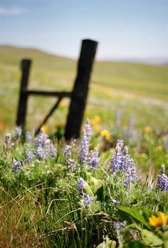 4himglory:  where fences never lack for flowers by manyfires on Flickr.
