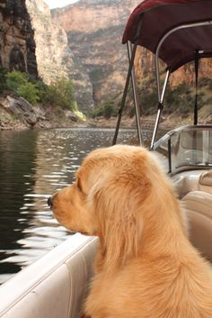 Gotta start 'em young! This adorable puppy on a boat is a great example of a boater's best friend being just that.