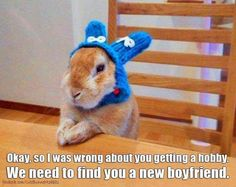 Buahahaha! Crazy bunny lady! #rabbit #bunny #bunnies #cuteanimals #pets
