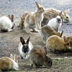 Okunoshima (Rabbit Island): Hiroshima Prefecture