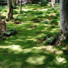 #green ,#gioji .#kyoto