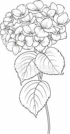 Blooming flower hydrangea on white background. Flower Line Drawings, Flower Sketches, Art Drawings, Fabric Painting, Painting & Drawing, Painting Tattoo, Colouring Pages, Coloring Books, Flower Coloring Pages
