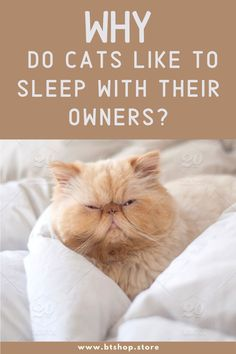 Fun Facts About Cats, Cat Facts, Cat Grooming, Investing, Rest, Sleep, Mom, Mothers