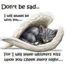 Whisker kisses