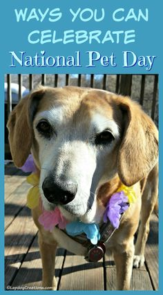 Ways You Can Celebrate National Pet Day ©LapdogCreations Dog Mom | Dog Products | Life with Dogs | Rescue Dog