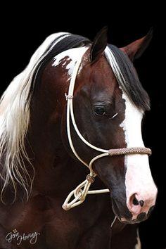 Commander Riminic - Stallion Directory