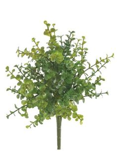 14 Boxwood Artificial Plant GreenBurgundy case of 24 -- Want to know more, click on the image.