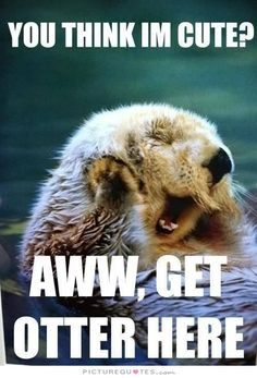 You think I'm cute? Aww, get otter here. Picture Quotes.