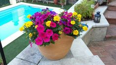 My Petunia flower basket