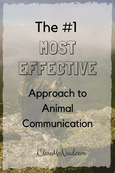 """I often get asked by readers """"where do I start with animal communication? What is the best approach?"""""""