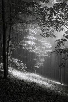 ~~Fog in June   mono photography   by freMDart~~