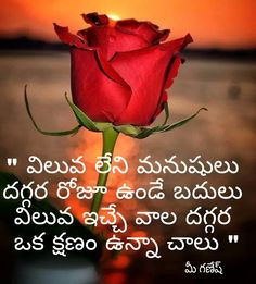 Inspirational Quotes in Telugu, Life Quotes in telugu, Motivational Quotes in telugu, Love Quotes in telugu, etc