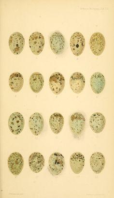 eggbooks