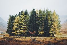 Camouflaged by Daniel Casson on 500px