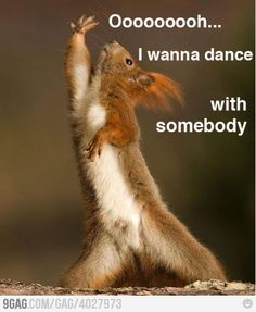 Squirrel dance this reminds me of @samfreese22 whose scared of squirrels lol