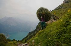 Swiss farmer Kari Gisler carries a bundle of hay during wild haying on the mountain Rophaien in Flueelen, Switzerland on August 20, 2012. The tradition of wild haying in Central Switzerland dates back around two hundred years on steep hillsides which cannot be reached with animals. (Michael Buholzer/Reuters)