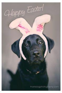 Happy Easter Dog   Thank Dog Photography