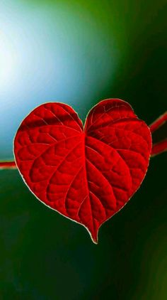 Single leave as a token of love and caring ♥️ Beautiful Nature Wallpaper, Beautiful Flowers, Supreme Iphone Wallpaper, Flora Flowers, Love Is Everything, Closer To Nature, Colorful Birds, Easy Paintings, Download Free Movies Online