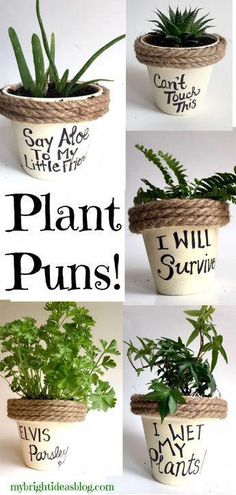 Puns on Painted Potted Flower Pots - Adorable Gift Idea to Make Them Smile Easy Gift Idea! Paint flower pots, add rope and a silly pun. Even kids could make this! Paint flower pots, add rope and a silly pun. Even kids could make this! Painted Flower Pots, Painted Pots, Decorated Flower Pots, Diy Garden, Garden Art, Garden Puns, Garden Gifts, Paint Garden Pots, Fairies Garden