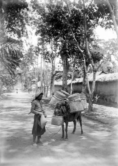 Chaff bag with a difference: Pack horse in Denpasar, Bali, Indonesia, 1900. Things have changed a bit in Denpasar since this was taken...