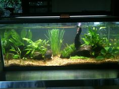 """Goldfish substrate:  An example of an aquarium with """"Peace River"""" by CaribSea substrate. 1mm-2mm. Can use w/plants. Use 1 lb of substrate per gallon to achieve a 1"""" bed or 2 lbs per gallon for a 2"""" bed. Freshwater. Packed with water containing beneficial bacteria. """"Live"""" substrate conditions and cycles newly setup aquariums. About $20 for 20lbs. (1mm-3mm recommended for goldfish)."""