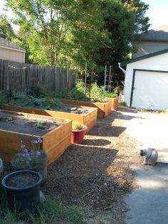 Raised bed gardening part 2