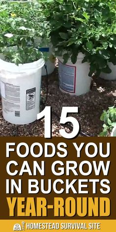 You might be surprised at all the foods that you can grow in your home or on your balcony, porch, or patio. Here are some best foods to grow in buckets. # container Gardening 15 Foods You Can Grow In Buckets Year-Round - Homestead Survival Site Homestead Survival, Survival Prepping, Survival Skills, Bucket Gardening, Gardening Tips, Flower Gardening, Gardening Books, Gardening Services, Gardening Gloves