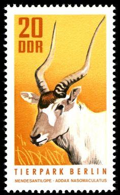 Stamp: Addax (Addax nasomaculatus) (Germany, Democratic Republic (DDR)) (Berlin Zoo) Mi:DD 1619,Sn:DD 1245,Yt:DD 1310,Sg:DD E1340,AFA:DD 1383