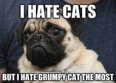 i hate cats but i hate grumpy cat the most - Grumpy Pug