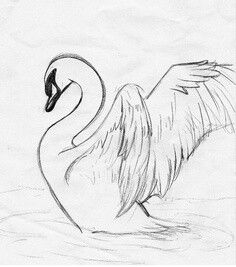 Get my swan tattoo. ((not my sketch)) love this for a back piece it would be awesome Animal Drawings, Pencil Drawings, Art Drawings, Sketch Painting, Drawing Sketches, Sketching, Schwan Tattoo, Tatoo 3d, Swan Drawing