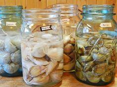Soaking Garlic Before Planting- Yellow Birch Hobby Farm Growing Gardens, Growing Herbs, Growing Vegetables, Edible Garden, Vegetable Garden, Organic Gardening, Gardening Tips, Gardening Books, Urban Gardening
