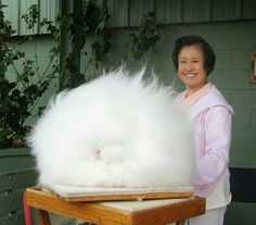 World's Fluffiest Bunny.