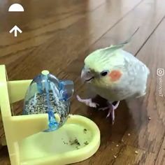 I guess these birds are smarter than me - Animals Funny Birds, Cute Birds, Pretty Birds, Cute Funny Animals, Cute Baby Animals, Animals And Pets, Wild Animals, Cute Animal Videos, Funny Animal Pictures