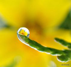 Rain drop on a branch, reflecting a flower.